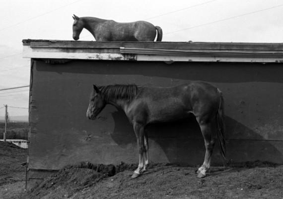 Two Horses, Fairbanks, Alaska