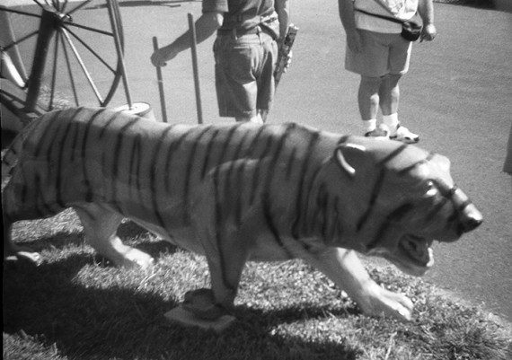 Tiger on the Loose at Hillsville Flea Market
